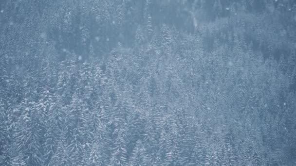 Schnee fällt im Bergwald. Verschneiter Wintertag im Hochland-Naturpark, gefilmt auf Wandertour in der kalten Jahreszeit. Schneeflocken fallen auf gefrorene Bäume im Hochland