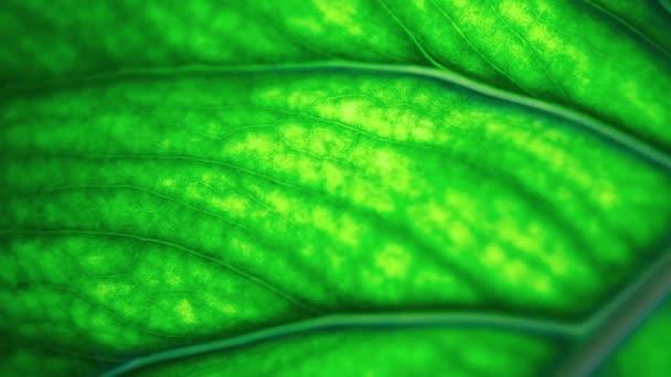 Zelený list natočený zblízka