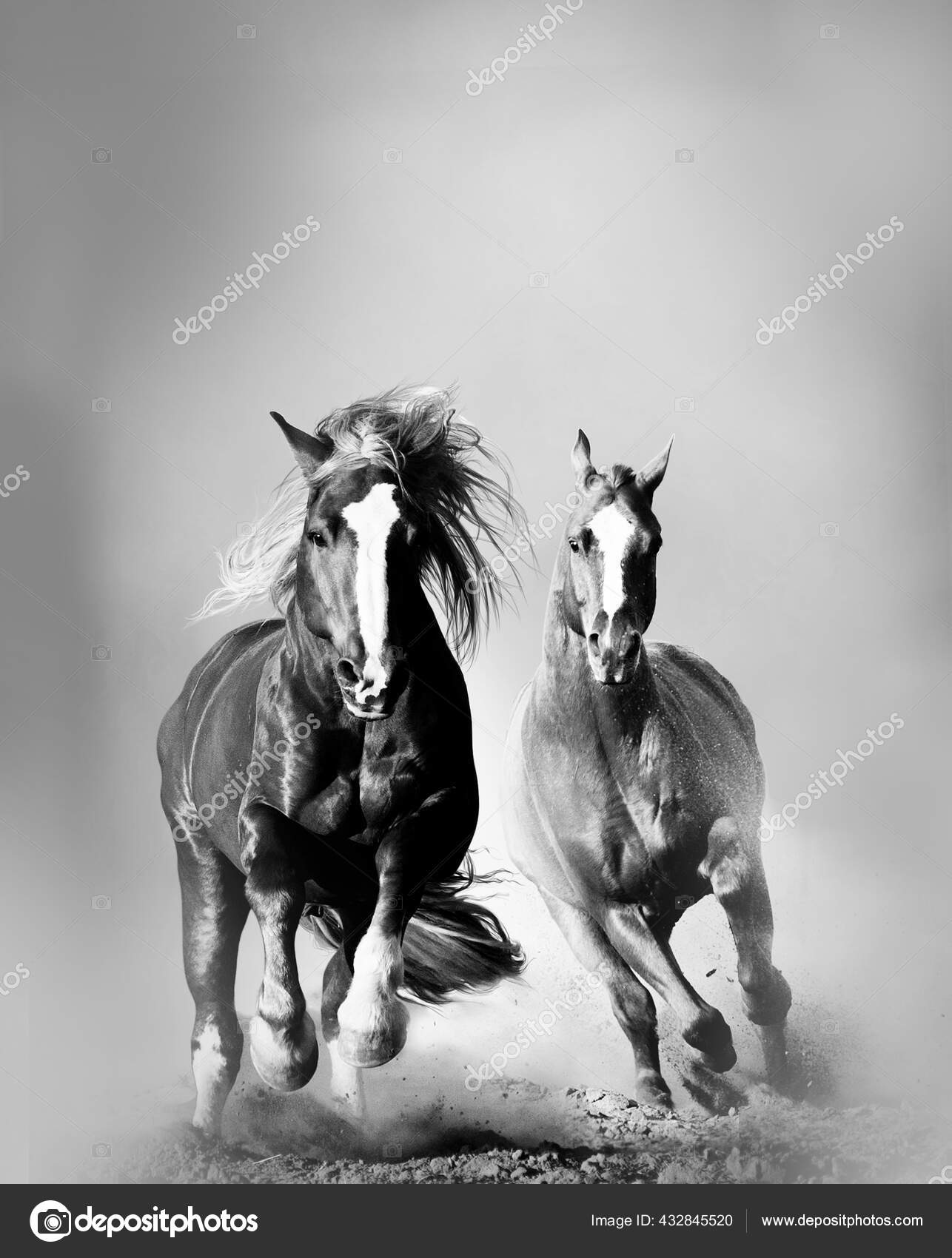 Two Wild Horses Running Together Dust Front View Monochrome Image Stock Photo C Mari Art 432845520