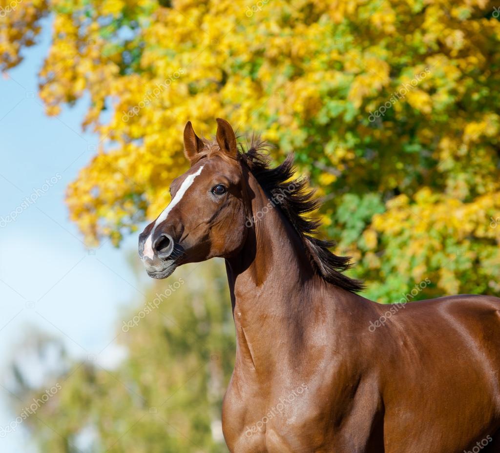 koně na podzim — Stock Fotografie © mari art  59174513 971656d968