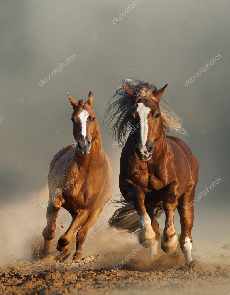 Two wild chestnut horses running front view stock photo two wild chestnut horses running front view stock photo sciox Choice Image