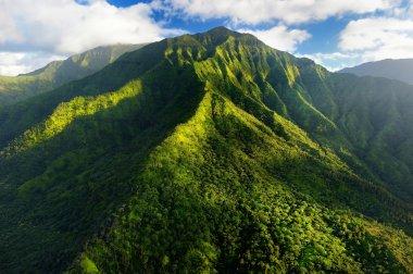 Kauai jungles in Hawaii