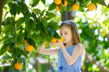 girl picking fresh ripe oranges