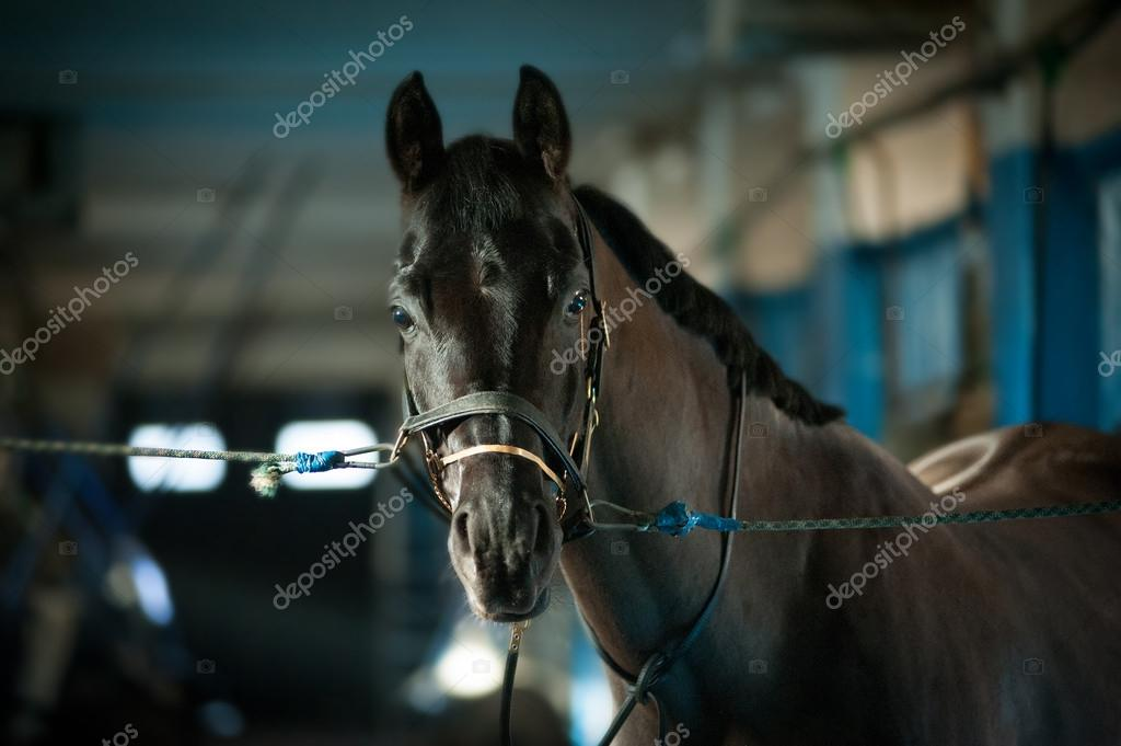 Bridle a horse in the stall