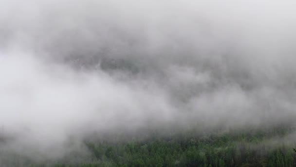 Zeitraffer-Video von Morgennebel im Altai-Gebirge. Nebel im Kiefernwald. Altai, Sibirien, Russland