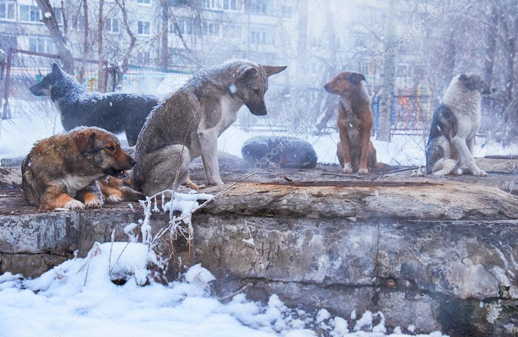 Homeless dogs in winter