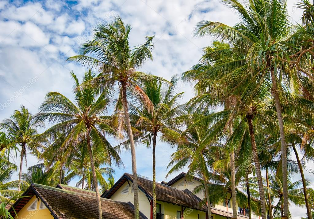 Palms and bungalows on Phuket