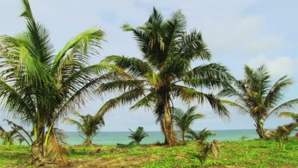 tropická pláž s palmami