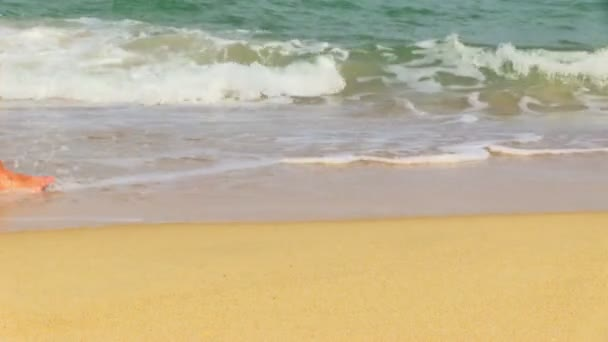 surfovat na tropické pláži