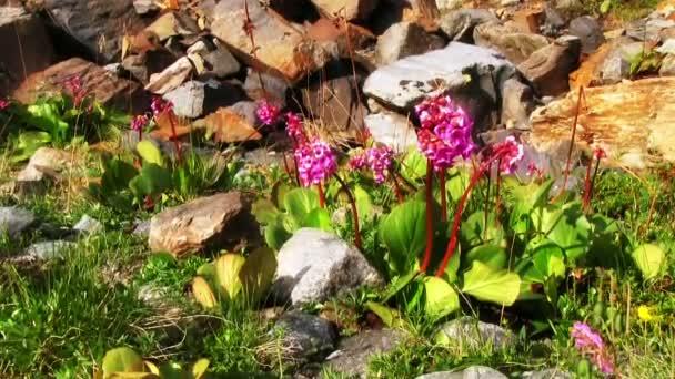 Horská květinové pole