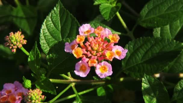 Rózsaszín trópusi virágok