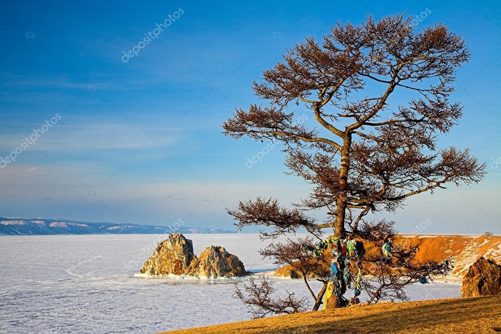 Shaman tree
