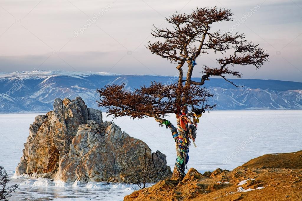 Shaman tree on Winter Baikal.