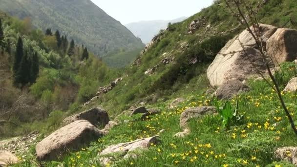 Horských květin hills