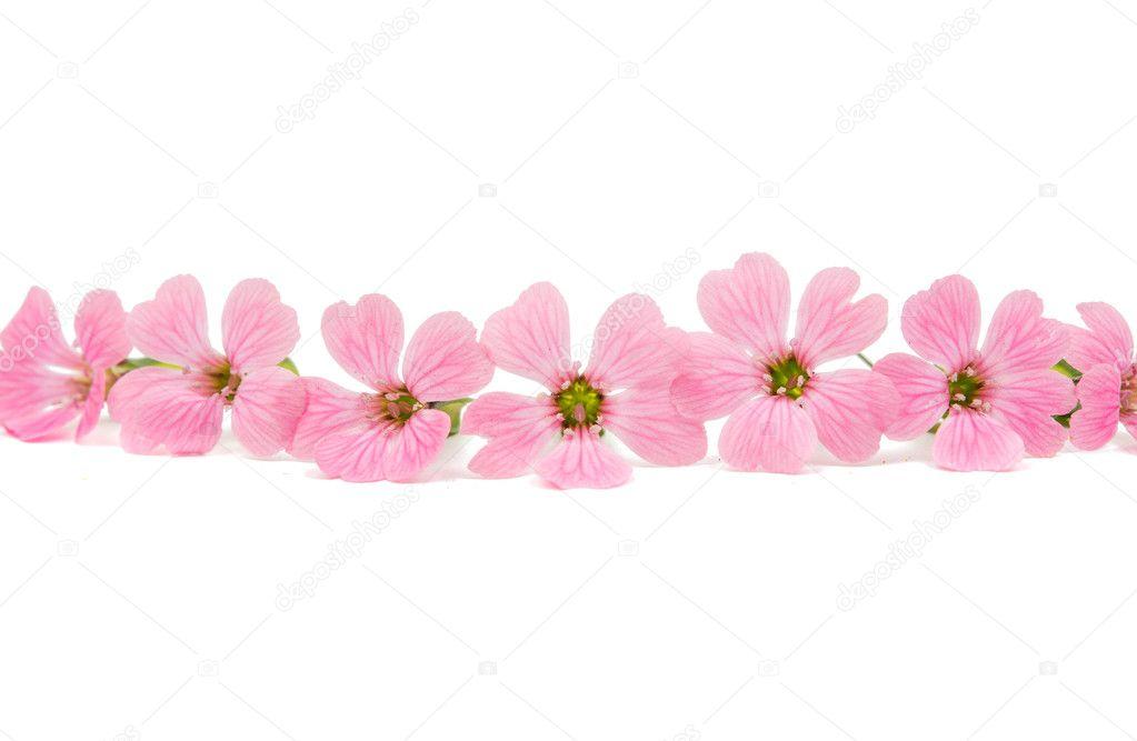 fotos flores rosadas delicadas flores rosadas foto de stock
