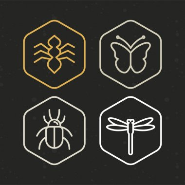 Vector insect icons in line style - logo design template clip art vector