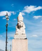 Photo Sphinx on Universitetskaya embankment