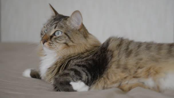 Kočka domácí během odpočinku