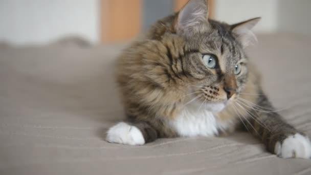 cat looking in opposite directions