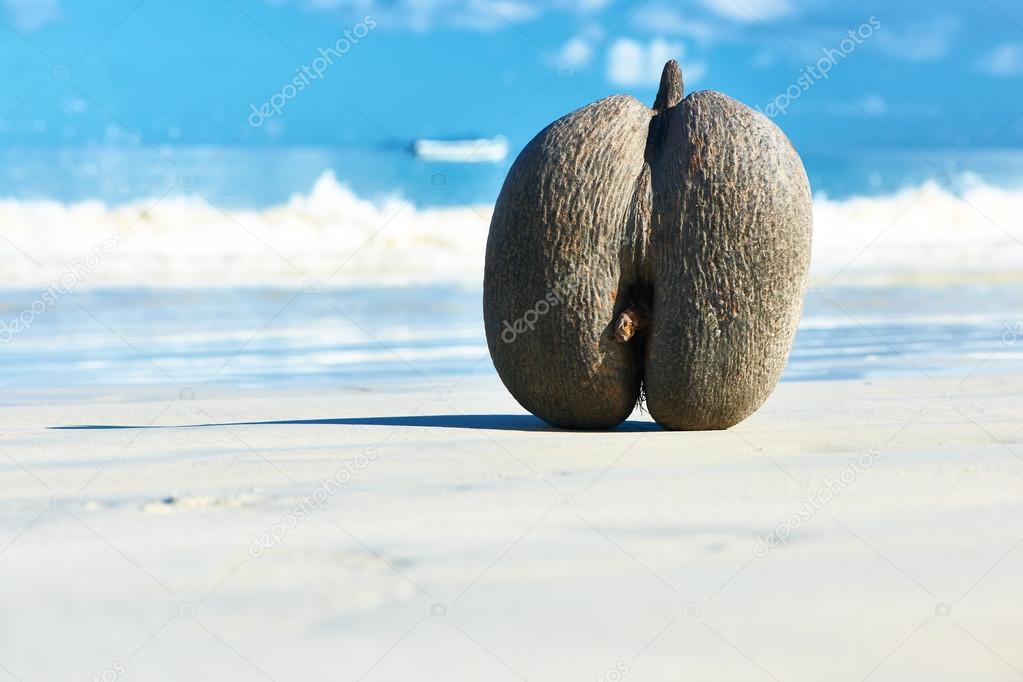 Sea's coconuts on beach