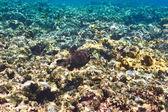 Fényképek korall zátony és a hal