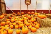 Fotografie Pumpkins for sale on market