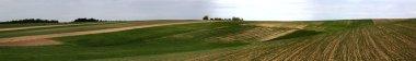 wheat field