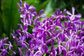 barevné květy orchidejí na světlé letní den
