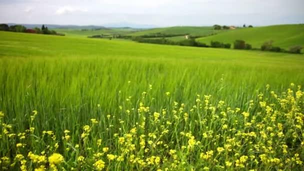 Zöld mező és sárga virágok