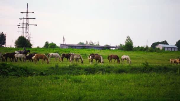 Páslo stádo koní