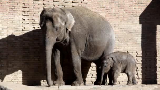 Két elefánt az állatkertben