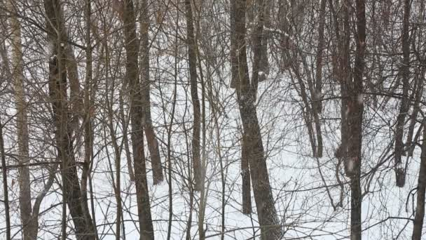 Sněžení v lese