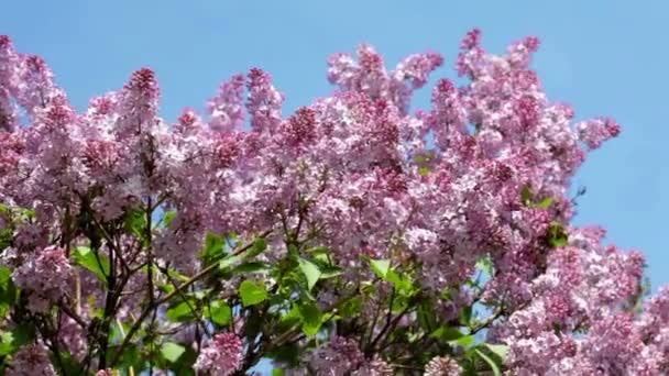 Bush květy