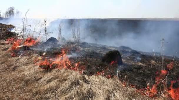 požár trávy v poli