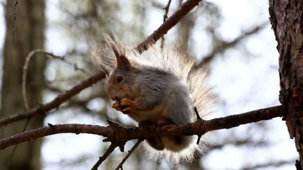 mókus anya eszik