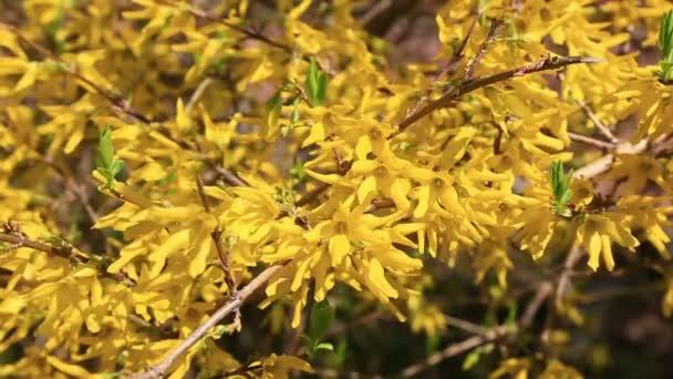 Žluté rostliny v květu