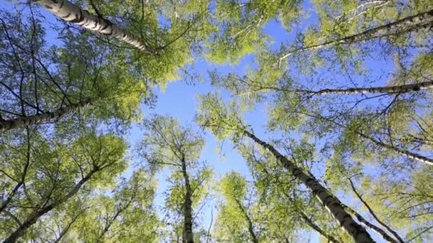 Forest treetops on blue sky