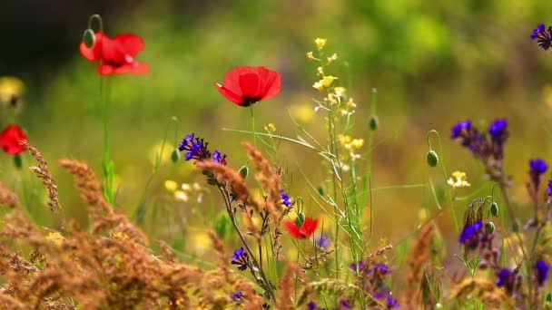 Mák a dalších květin na vítr