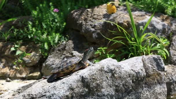 želva sedí na skále
