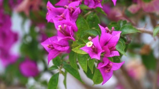 růžové květy v zahradě