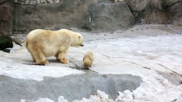 Polar bear and bear-cubs playing