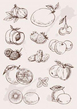 Hand drawing fruits