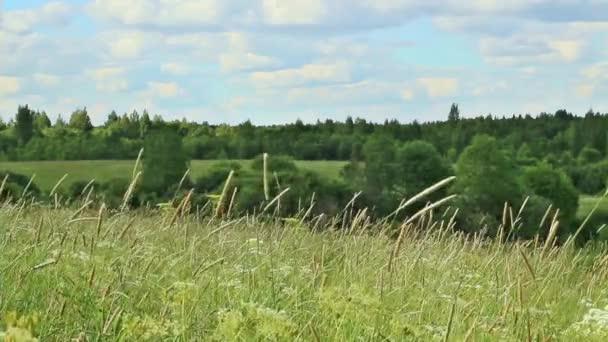 letní krajina s louka