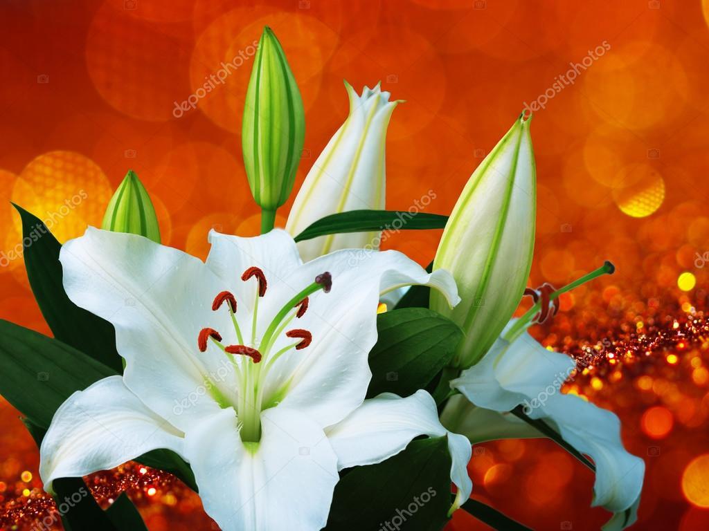 Fleur De Lys Blanc Photographie Irochka C 109823672