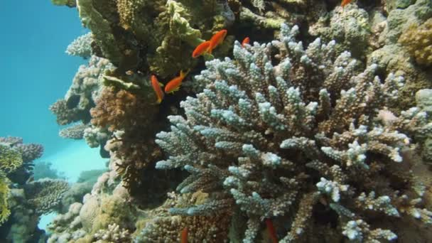 Tropical fish and rocky reef
