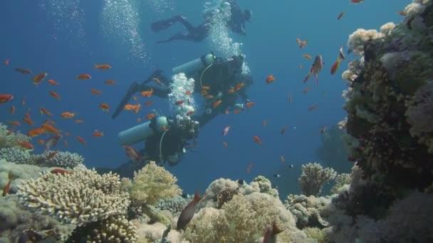 Scuba divers swimming  in  Red Sea