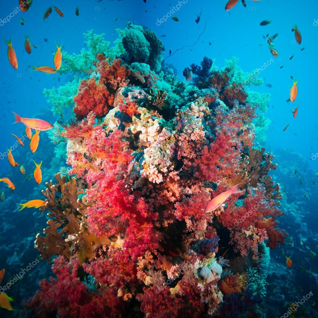Colorful underwater reef with coral and sponges — Stock Photo ...