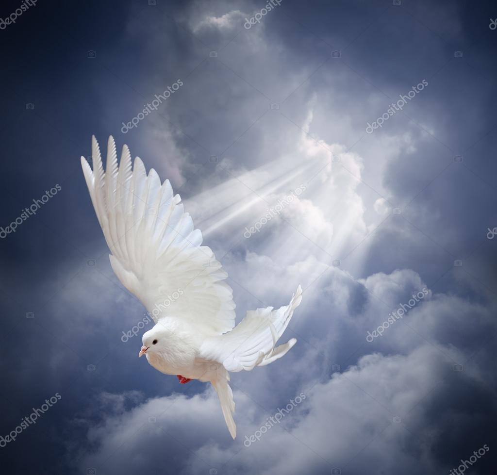Paloma Blanca Volando Sobre Cielo Fotos De Stock Irochka 68766003