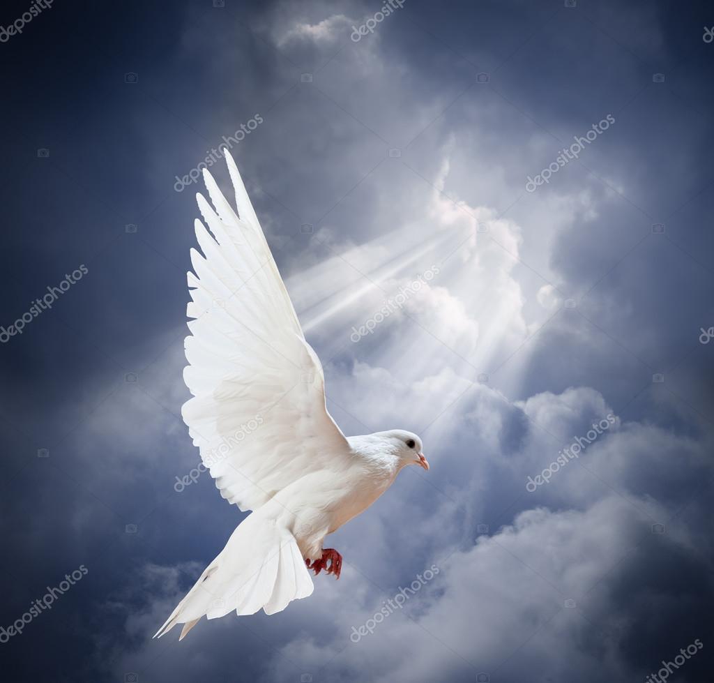 Paloma De Frente Paloma Blanca Volando Sobre Cielo Foto De Stock