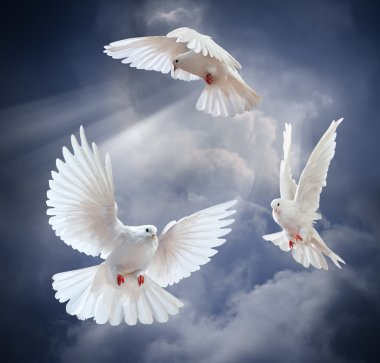 Flying white doves on sky